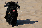 Jess's dog Molly at the beach in Scheveningen, Holland