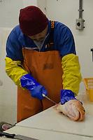 Processing Fish at Prime Select Seafoods, Cordova, Alaska, US, October 2012