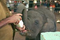 Sri Lanka Elephant Transit Home