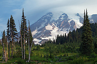 Mount Rainier over subalpine meadow on Mazama Ridge, Mount Rainier National Park, Washington, USA