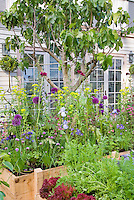 Beautiful raised bed den, Vegetables, carrots, peas, cabbages, flowers, irises, house, in lush variety growing together intermixed, fig tree, ornamental onions, blue flowers, purple flowers, red lettuce, edible landscaping, herb chives intermixed potted