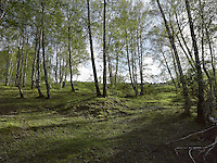 FOREST_LOCATION_90031