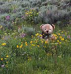 A stuffed teddy bear sits amid wild flowers.