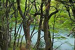 Rio de las Vueltas and Southern beech trees, Los Glaciares National Park, Argentina