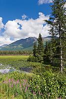 Fireweed and lily pads, Bear lake, Kenai mountains, Kenai Peninsula, southcentral, Alaska.
