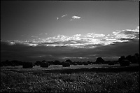 Hay, Occold, Suffolk | Black and White Photography