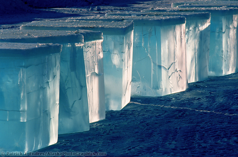 Large blocks of ice, cut and harvested from a pond will be used in the World Ice Art Championships held each march in Fairbanks, Alaska