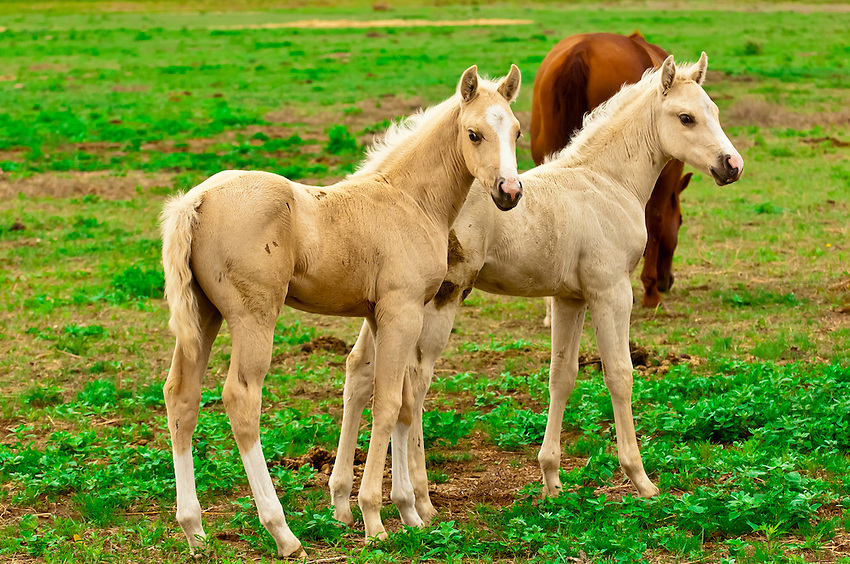 Image Gallery Horse Colts