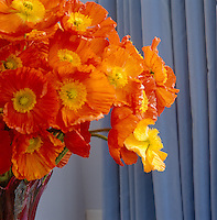 A stunning colour contrast has been created in the cool blue living room with this vivid orange flower arrangment