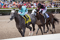 HALLANDALE BEACH, FL - MARCH 04: #4 Bird Song ridden by Julien Leparoux wins the G3 Fred Hooper  Stakes at Gulfstream Park, Hallandale Beach, FL. (Photo by Arron Haggart/Eclipse Sportswire/Getty Images)