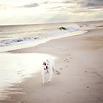 Petey at the Beach