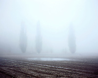 Fog hangs over a muddy field shrouding trees at the Spoilbank Cemetery, Zillebeke near Ypres.