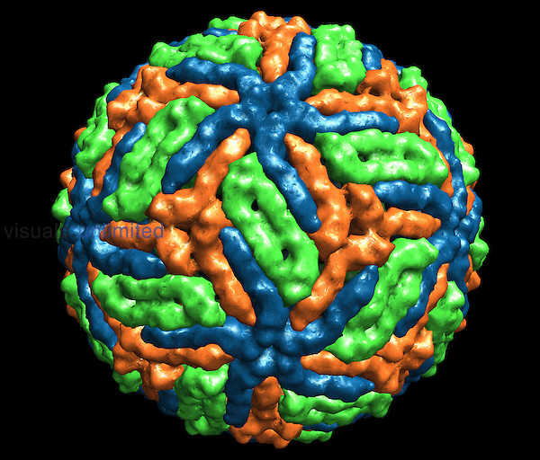 West Nile Virus from X-ray crystallography data with colors representing proteins.