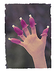 Child's hand with foxglove flowers