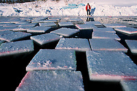 Large blocks of ice float in a pond before being harvested. Blocks, cut by chainsaws are used by sculptors in the World Ice Art Championships held each march in Fairbanks, Alaska