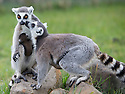2016_04_13_Peak_Wildlife_Park