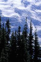 Trees silhouetted against Mt Rainier's Emmons Glacier, Mount Rainier National Park, Washington