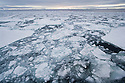 Ocean covered with pack ice, midnight in June; Svalbard, Norway