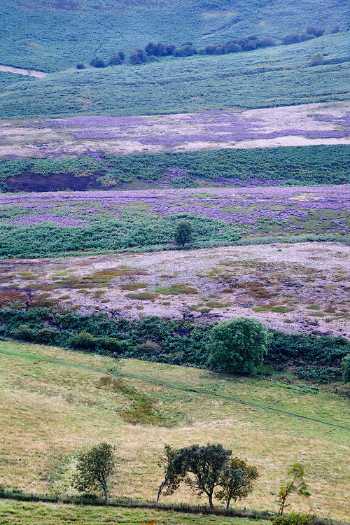 Summer Heather at The Hole of Horcum North York Moors National Park Yorkshire England