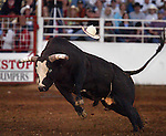 7/02/2005 -The St. Paul Rodeo...KEYWORDS: animals, horses, bulls