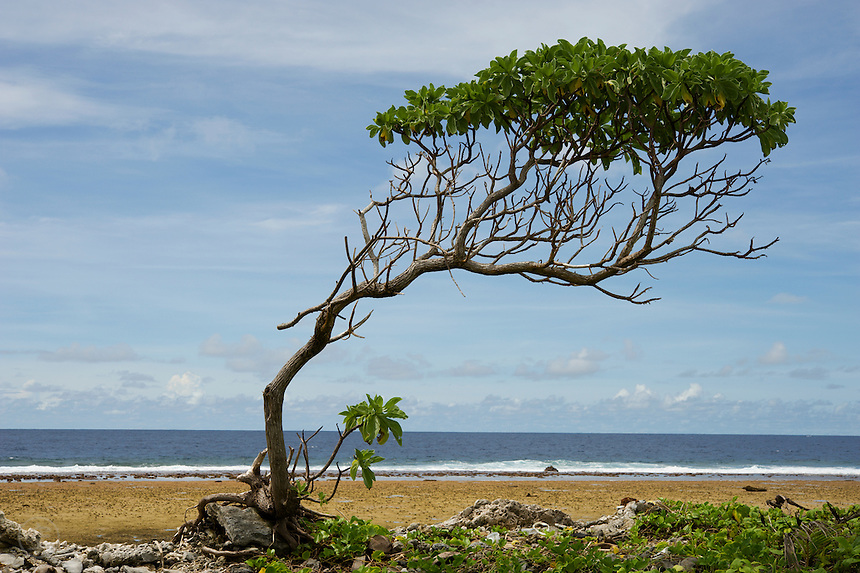 A twisted tree grows along a narrow part of Jaluit Island, facing the ocean-side waves of Jaluit Atoll in the Marshall Islands