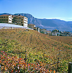 View of vineyards in Northern Italian Alps, ITALY