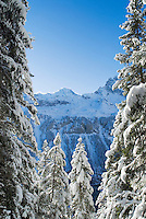 Trees covered with fresh snowfall, Gimmelwald, Switzerland