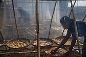 Villagers dry fish as part of the post harvest activity in the fisheries in Damin Naung village in Pyapon district of Myanmar.
