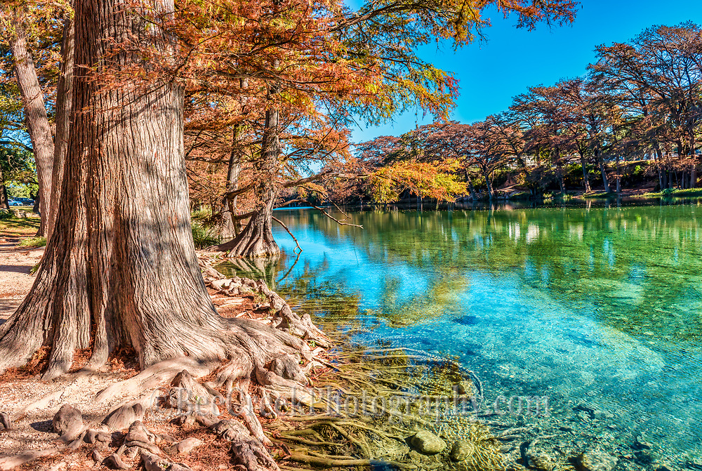 We capture this wonderful cypress tree with it roots reaching out into the clear emerald waters along the Frio River. Garner State Park is very unique place with it emerald green clear waters of the Frio River as it flows through the canyons of the Texas Hill Country.  This place is an excellent place to be on a hot summer day.  However it can be just a beautiful on a fall day with the colorful fall colors of the cypress trees  and maples along the river with the emerald green waters. This is one of the most scenic places in Texas.