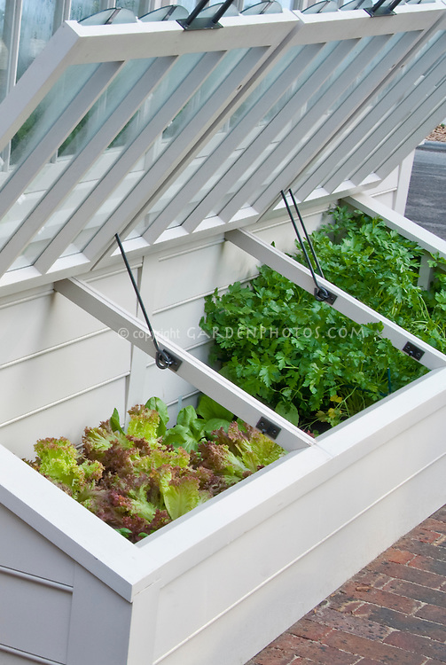 Cold Frame in Vegetable Garden with young lettuce plants