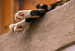 Dangling legs and tail of sleeping cat on ledge, Italy