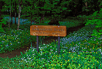 A SIGN FOR THE LAKESHORE TRAIL AT MINERS CASTLE WITH SPRING WILDFLOWERS IN PICTURED ROCKS NATIONAL PARK NEAR MUNISING MICHIGAN.
