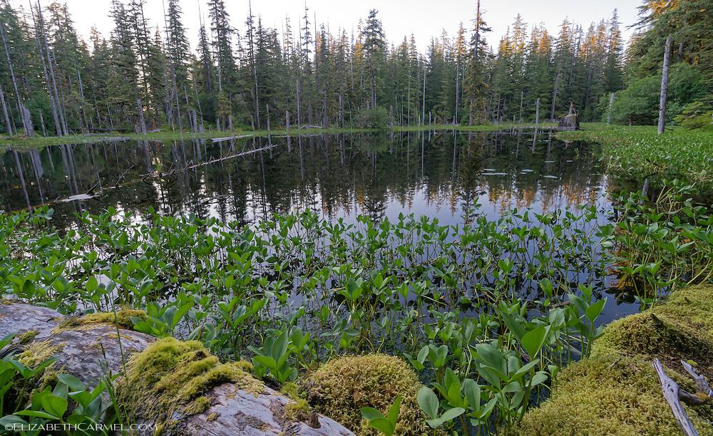 Rainforest Pond