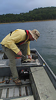 NWA Democrat-Gazette/FLIP PUTTHOFF <br /> Jon Stein of Pea Ridge, area fisheries biologist with the Arkansas Game and Fish Commission, measures a walleye he caught Aug. 19 2016 on a jigging spoon in the Rocky Branch area of Beaver Lake. The walleye was shy of the 18-inch minimum length limit and was released.