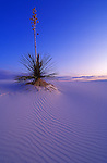 Yucca and dune patterns at dusk, White Sands National Monument, New Mexico USA
