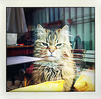 """Tiger"",..photo shot with iPhone 4..Photo © Stefan Falke..http://www.stefanfalke.com/"