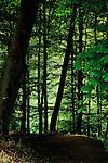 Silhouetted tree trunks, Imst district, Tyrol,Tirol, Austria.