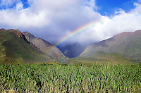 A rainbow over the West Maui Mountains and sugarcane field, commemorating the end of an era on Maui and Hawai'i in general; this November 2016 when the last fields are harvested (through December 2016).