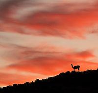 Patagonia 2016 Wildlife & Scenery