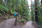 Hoyt Arboretum, part of Forest Park, in Portland, Oregon