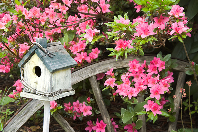 """Birdhouse and pink azaleas with weathered wagon wheel for rustic """"shabby chic"""" garden decortaion."""