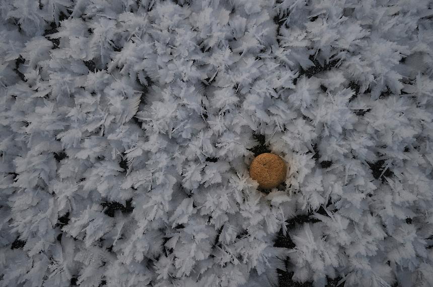 Ice,icerose,isrose,iskrystaller, iskrystall, Snøkrystaller,snow crystals