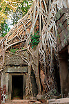 Tree Roots Engulfing Ancient Ruins of Ta Prohm, Cambodia
