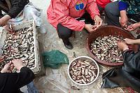 Locals gut fish in the Zhalong Wetlands, Heilongjiang Province. China. 2011