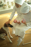 Two boys dressed in white sit holding pink Christmas baubles and stroking the dog