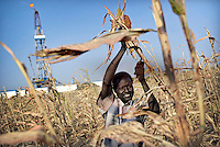 John harvests sorghum beside an oil field. The company Petronas that built the oil field on John's agricultural land compensated him with a payment in Sudanese pounds.