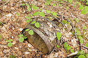 Artifacts (wooden barrel) along the old Sawyer River Logging Railroad near Camp 6. This old rail-line is now the Sawyer River Trail in Livermore, New Hampshire USA. This was a logging railroad that operated from 1877-1928.
