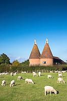 Traditional old Kentish oast house, hop kiln, for kilning (drying) hops for beer at Sissinghurst in Kent, England, UK