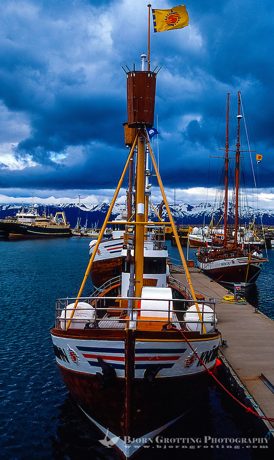 Iceland. Whale watching out of Húsavík.