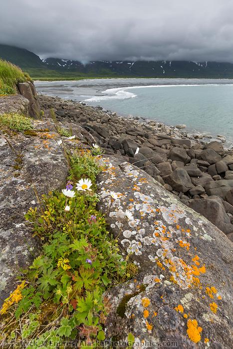 Landscape along the Alaska Peninsula coast, Katmai National Park, southwest, Alaska. Orange lichen on the foreground rocks, Aleutian mountain range covered in clouds.
